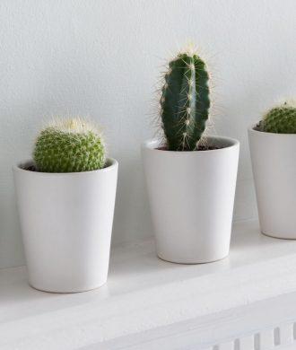Melhores plantas para ter em casa